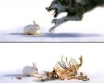 Rabbit Eats Fox