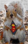 Super Squirrell